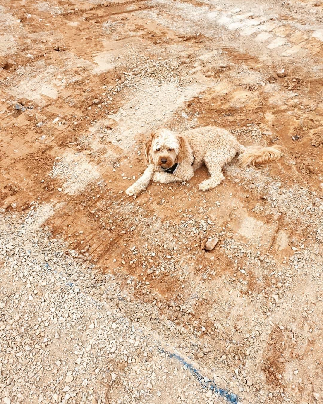 dog in dirt.jpg