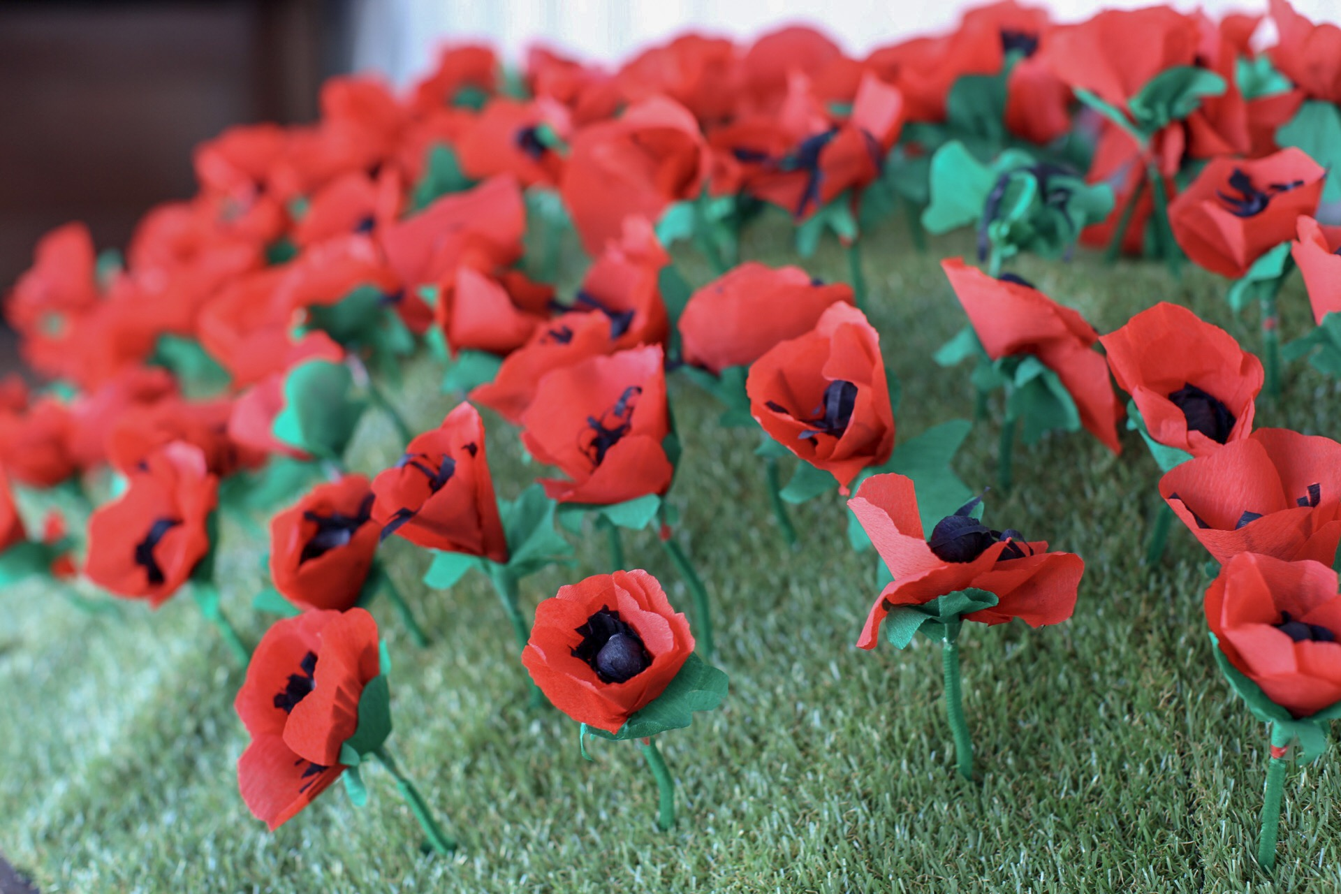 ANZAC Poppy Remembrance Field in collaboration with  The Torpedo Bay Navy Museum .  Over 200 poppies were made by students at The Academy for Gifted Education and Takapuna locals who dropped by our paper poppy making workshops in the blue container.