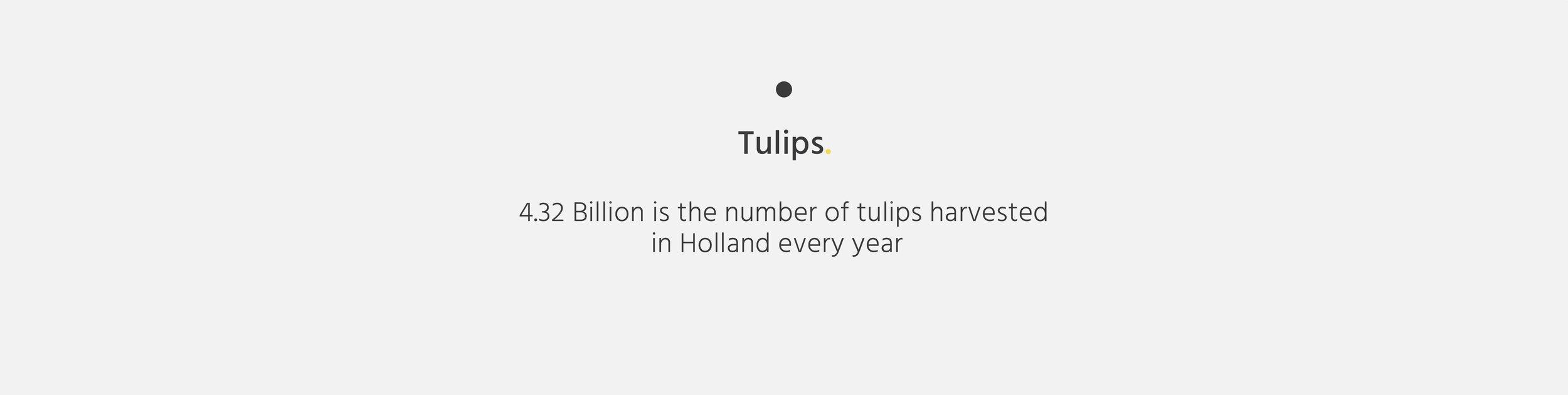 TextBlock_Tulips.jpg