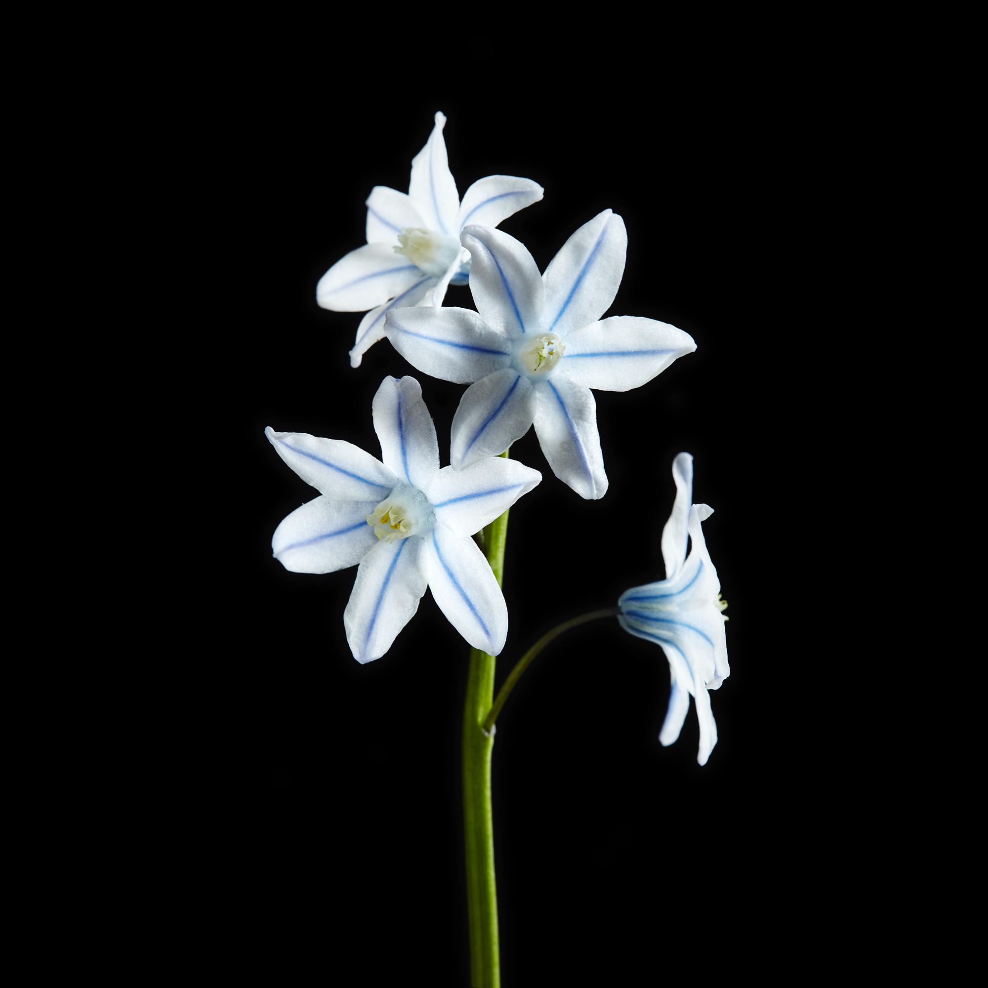Flowers#063876.jpg