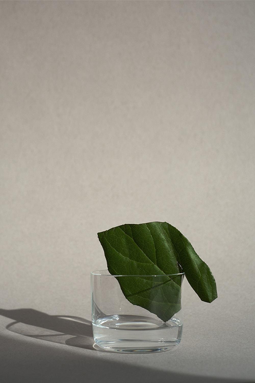 Lemonade_061_f2-1.jpg
