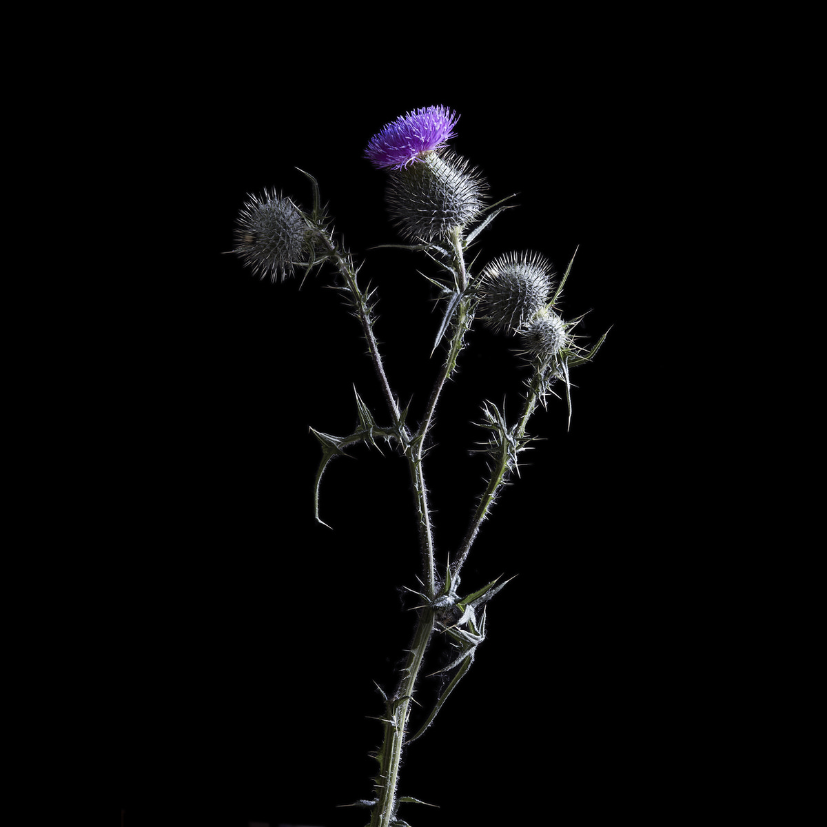 Flowers#015_4129-1.jpg