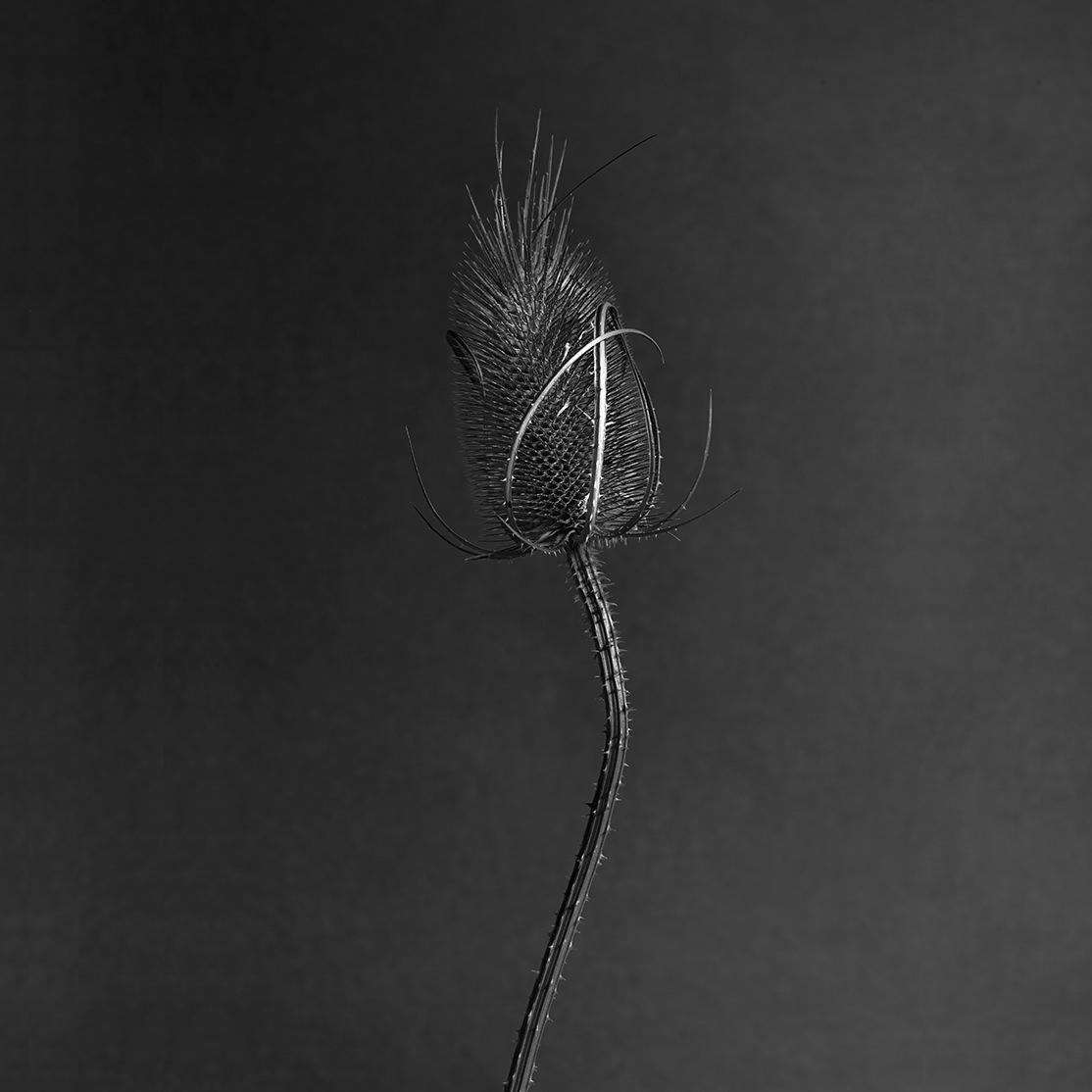 Flowers#062661.jpg