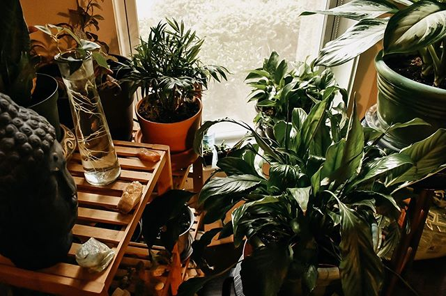 [lighthearted/plants] 🌱🌿 Not my face, not yoga, not @derekmichaelhuntington. My second greatest love are these plants. If I had a more light-filled apartment, plants would consume all of my attention. I'll settle for my mini jungle in front of the one window in my 🏠 that gets consistent sunlight.☀️We're going to have to start building up pretty soon. Any suggestions?! - - - - - - #houseplants #peacelily #pathos #plantlady #homegrown #sunlight #oxygen #freshair #palm #buddha #pottedplants #green #greenthumb #propagate #cactus #succulents #cactusclub #crazyplantlady #plants #plantsofinstagram #houseplantsofinstagram