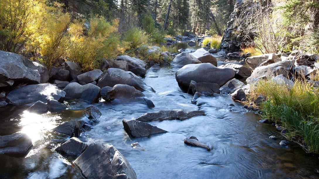 Sebene Selassie Connection & Nature Meditation Retreat Vallecitos Mountain Ranch New Mexico Summer 2019.jpg