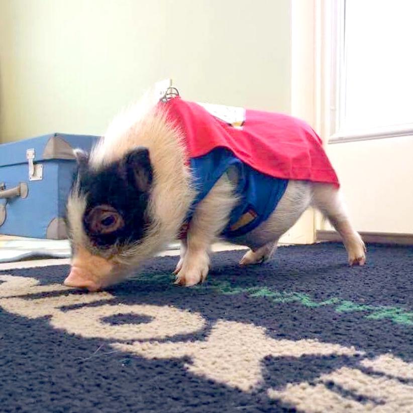 baby pig.jpg