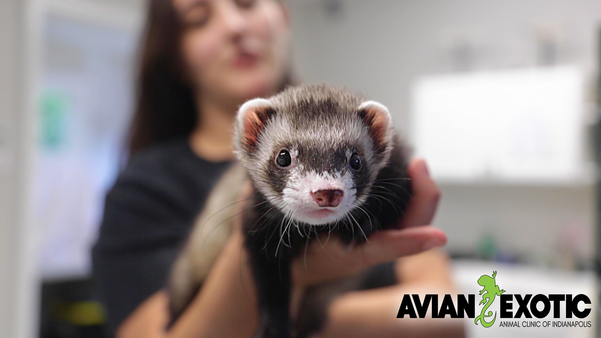 Ferret with AEAC logo.jpg