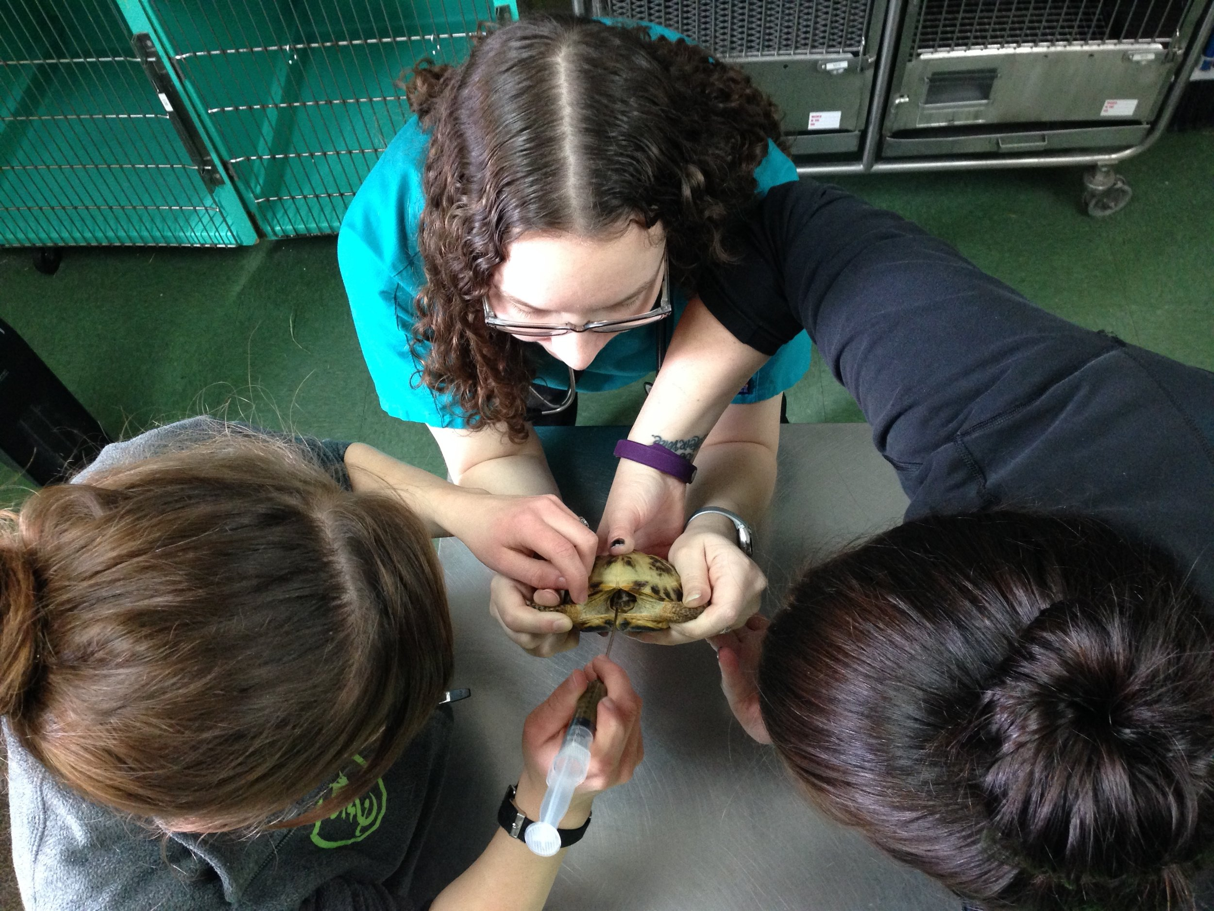3 person turtle tube feed.JPG