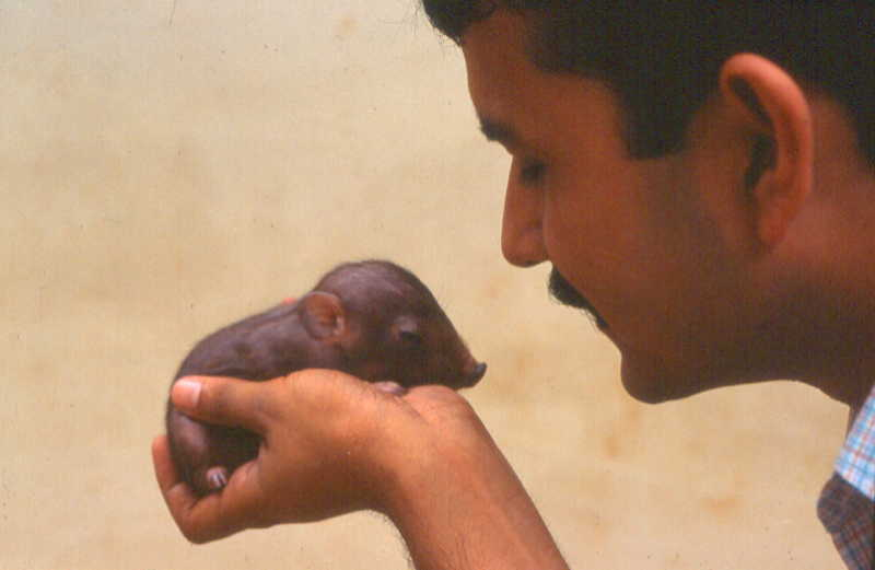 E3 Parag Deka with infant pygmy hog.jpg