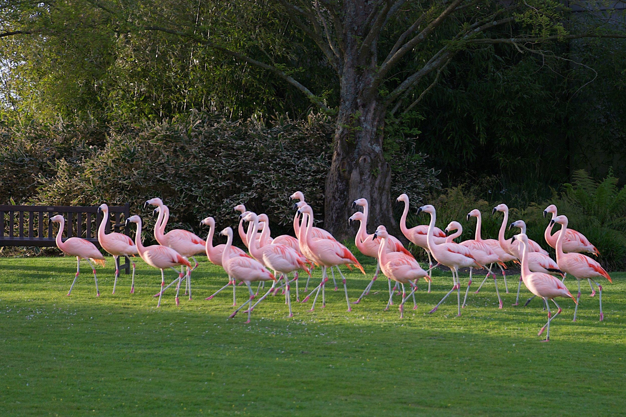 22A Flamingos - On Patrol.jpg