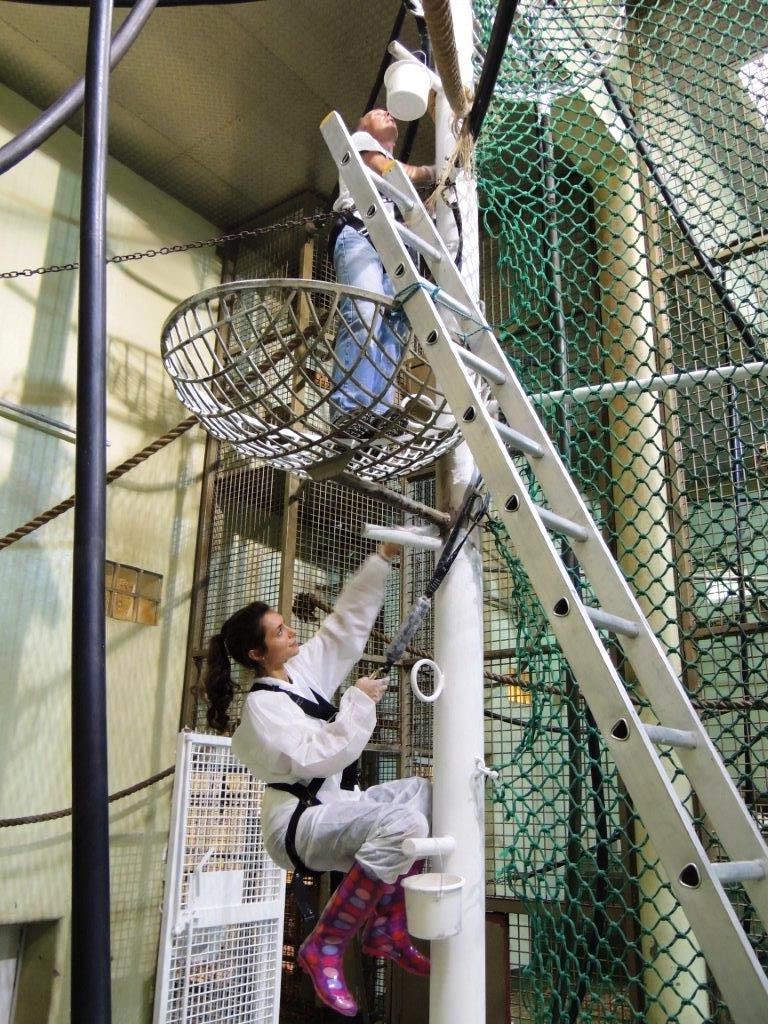 Jersey Zoo Standard Bank help orang enclosure 2014.jpg