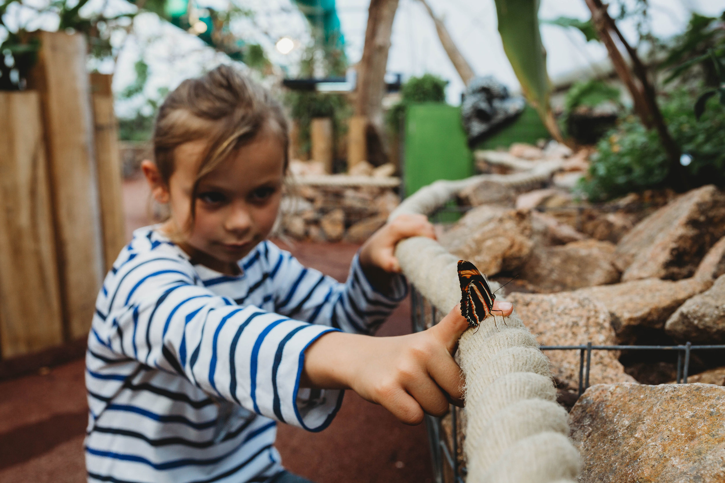 Butterfly House 28 - credit White Saige Photography.jpg