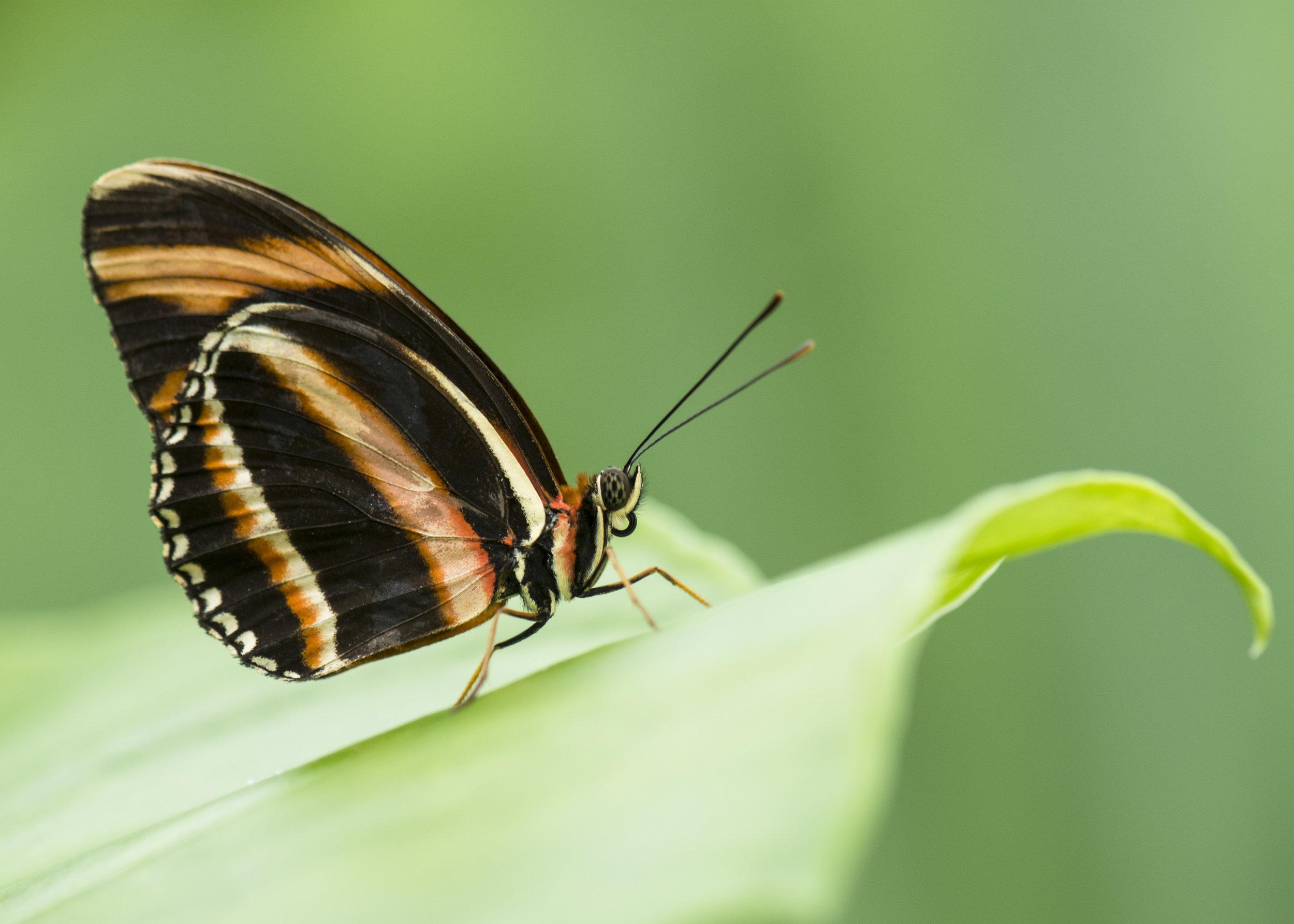Butterfly 9 credit Nina Powell.jpg