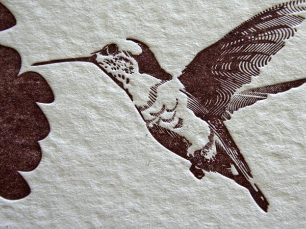 _0003_portillo_janssen_hummingbird2.jpg