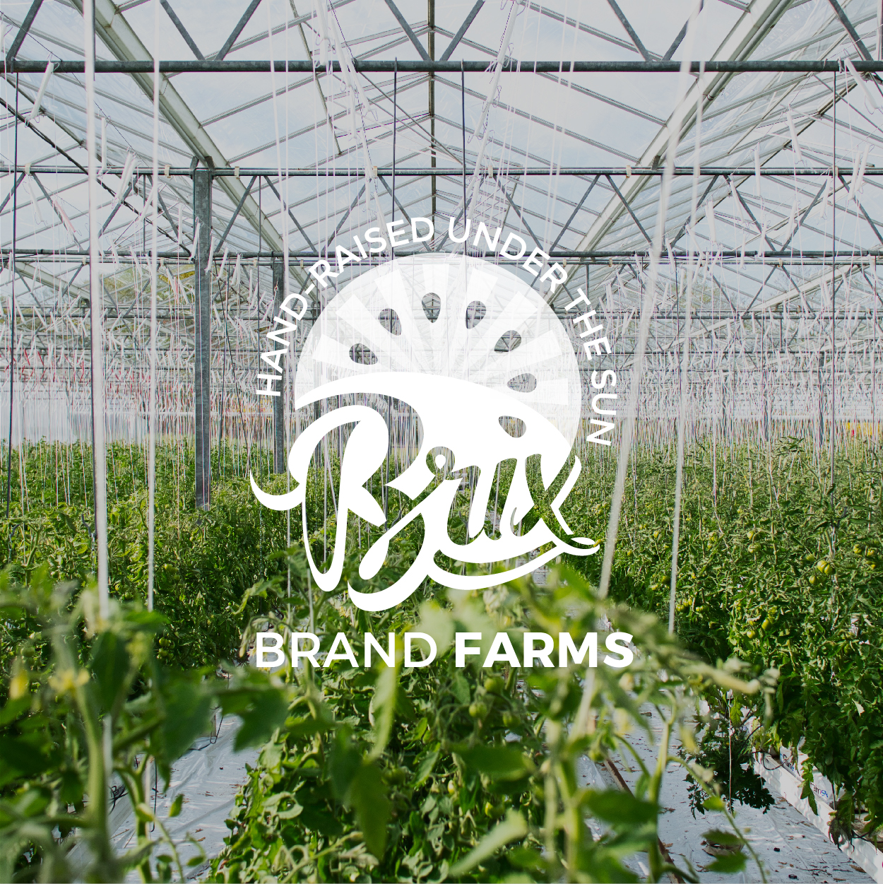 <p><strong>Brix Brand Farms</strong></p>