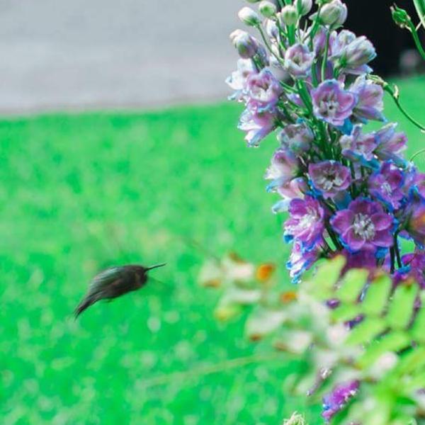 garden4wildlife-bird.jpg