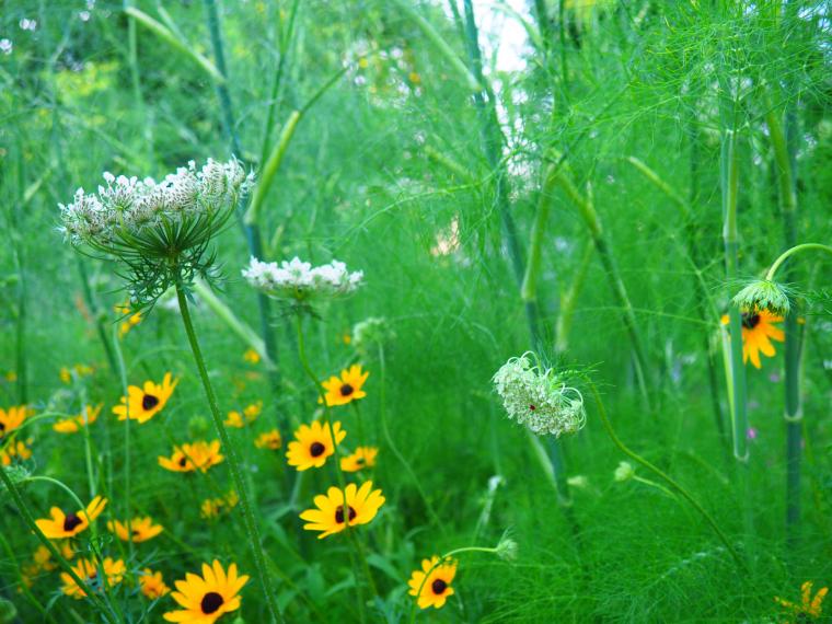 wildflower-gardening-in-windy-Pennsylvania-4.jpg