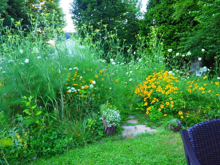 wildflower-gardening-in-windy-Pennsylvania-3.jpg