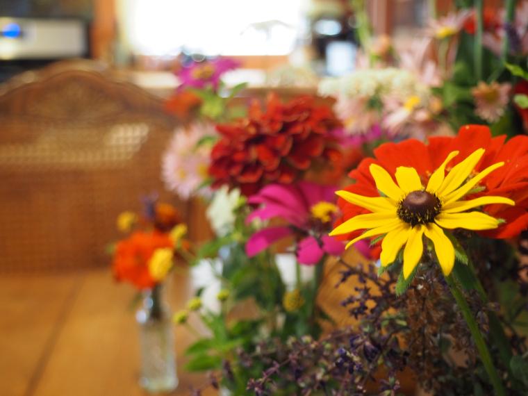 wildflower-gardening-in-windy-Pennsylvania-2.jpg
