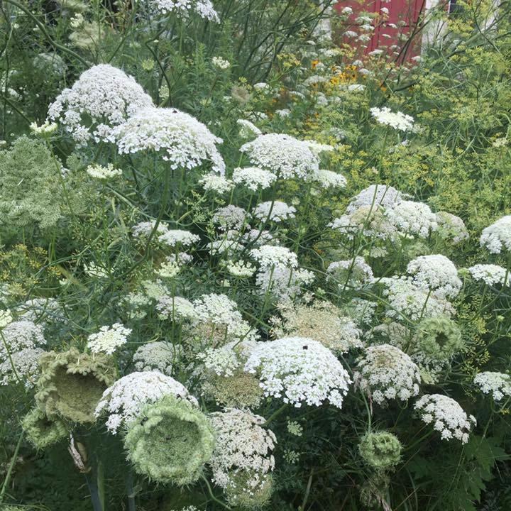 wildflower-gardening-in-windy-Pennsylvania-5.jpg