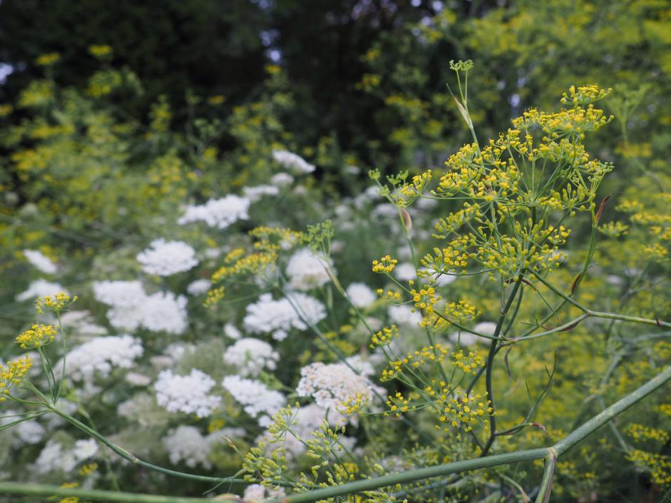 wildflower-gardening-in-windy-Pennsylvania.jpg