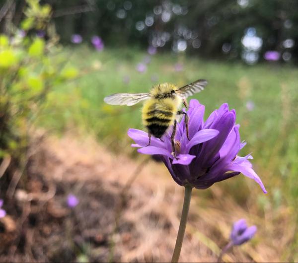 emilypeony-pollination.jpg