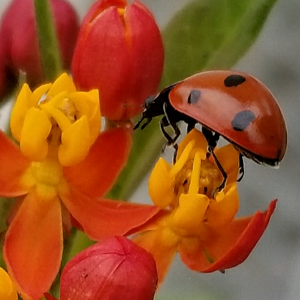 helen.g-pollination.png