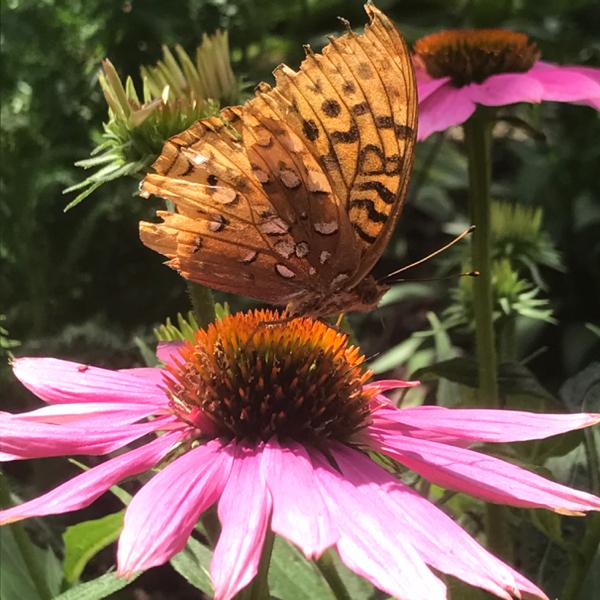 pollinator-better-areiber.jpg