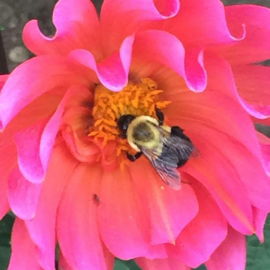 pollinator-angeladuffiney.jpg