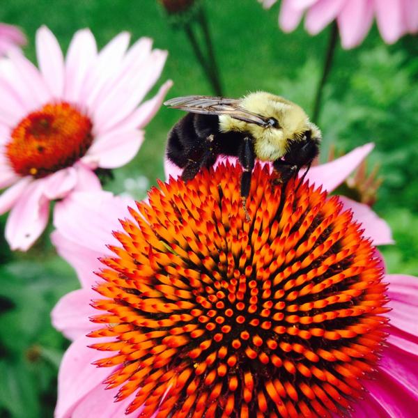 Pollinator-ChristinaLarson.jpg