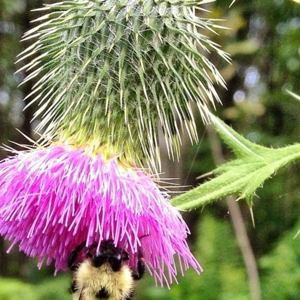 Pollinator-elker.jpg