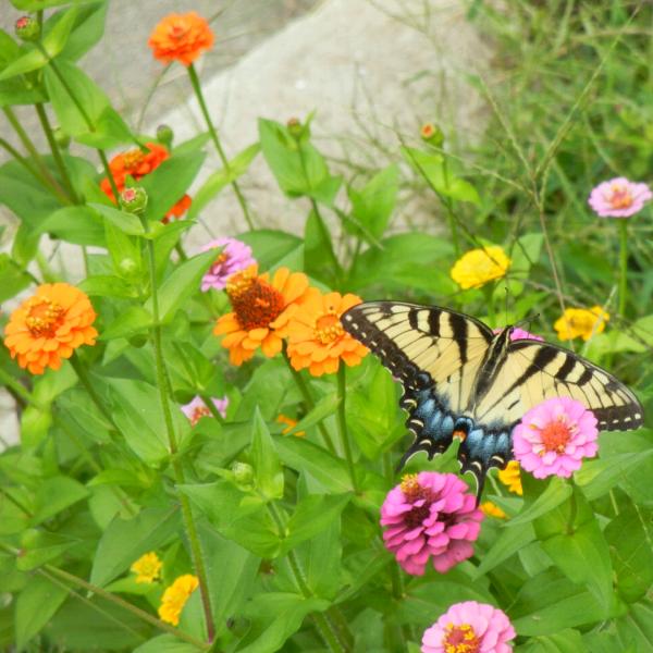 Pollinator-mrsriggs.png