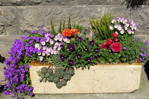 plant-flower-decoration-botany-garden-flora-624383-pxhere.com.jpg