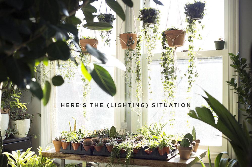 plant lighting 2.jpeg