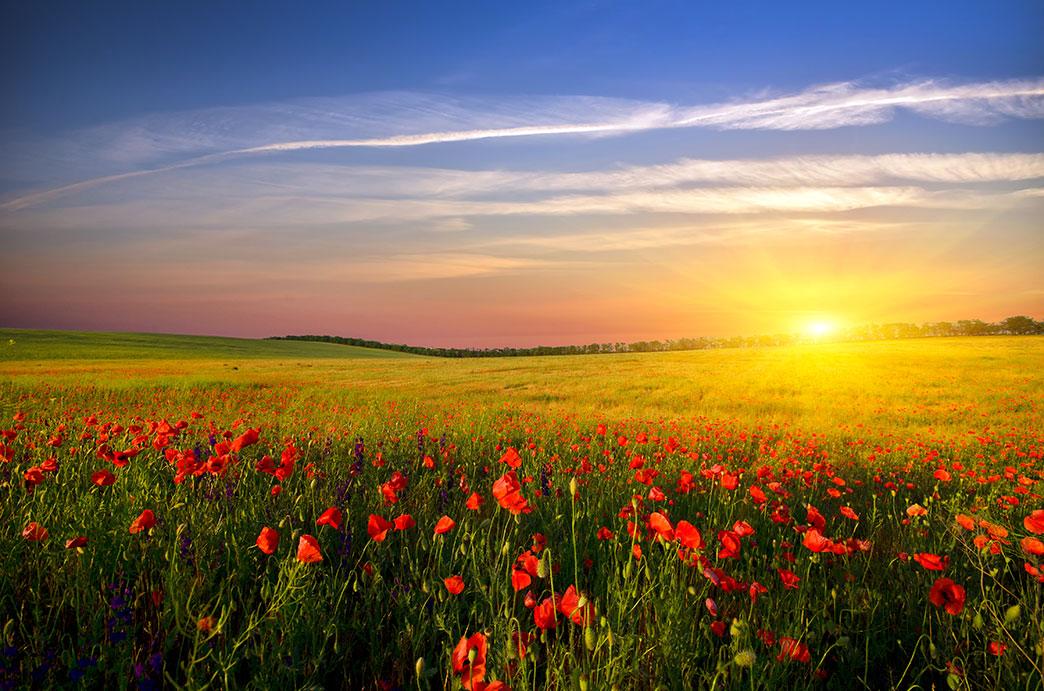 poppies-yogi-muse.jpg