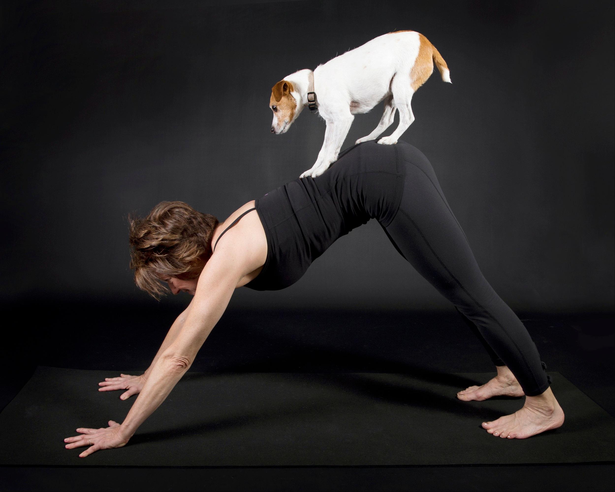 Dog on dog.