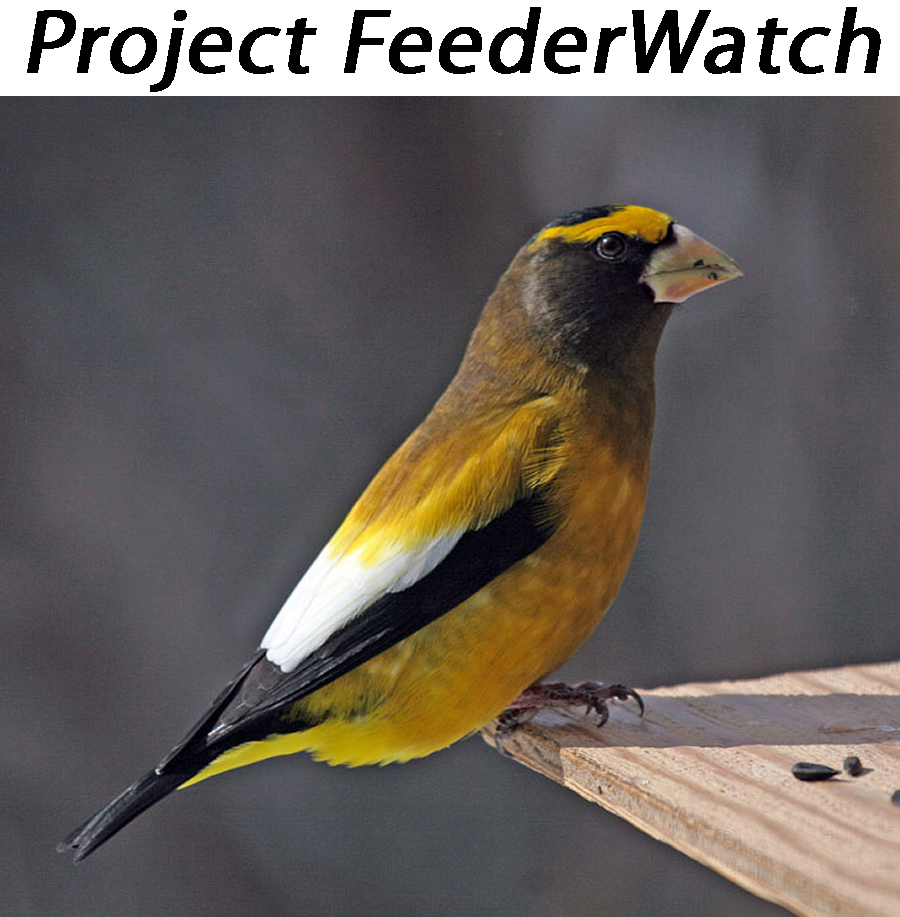 project-feederwatch.jpg