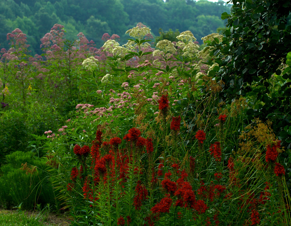 Cardinal flower, Joe-Pye weed   Courtesy Douglas Tallamy