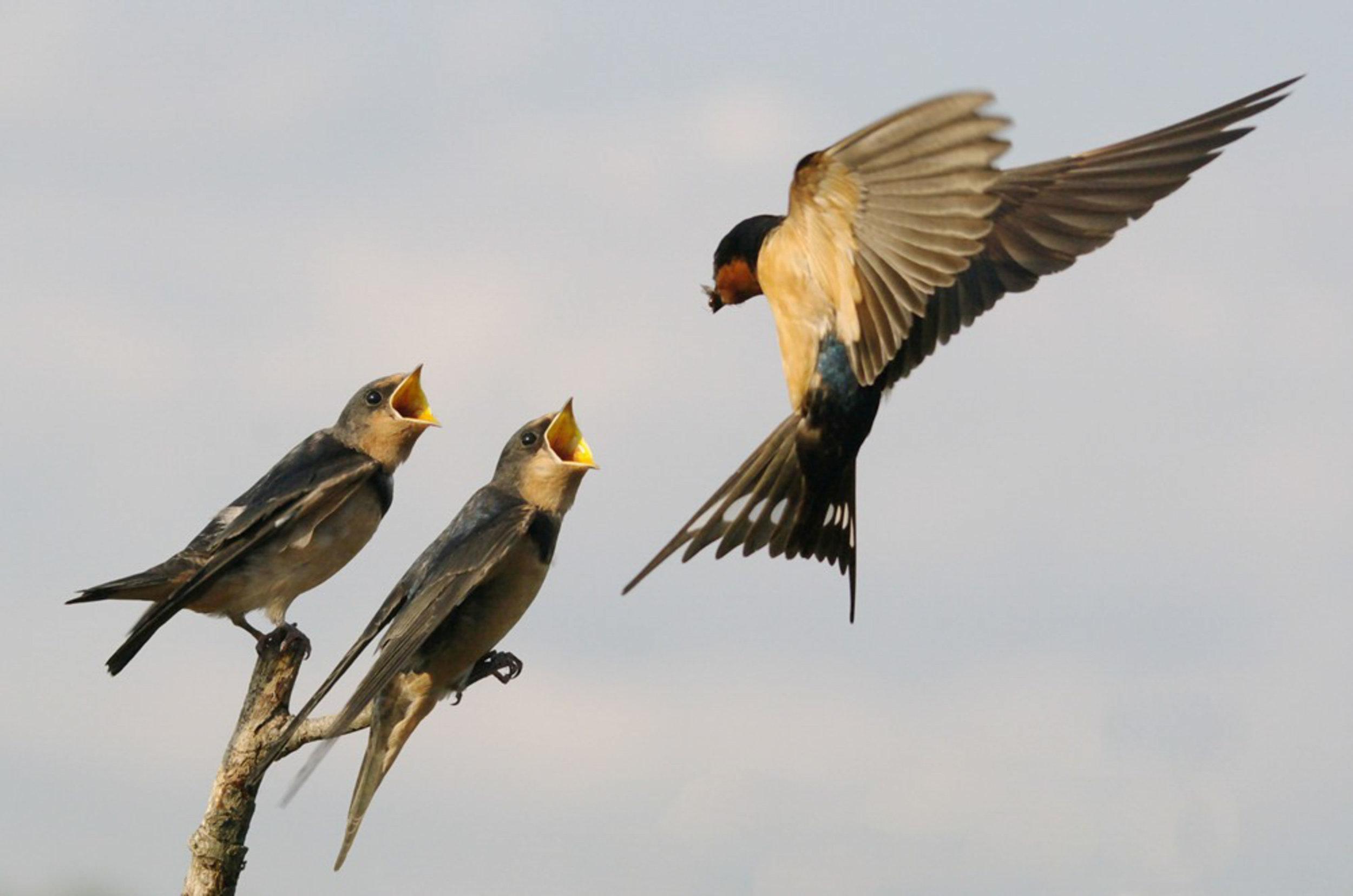 Philip Yabut/Audubon Photography Awards