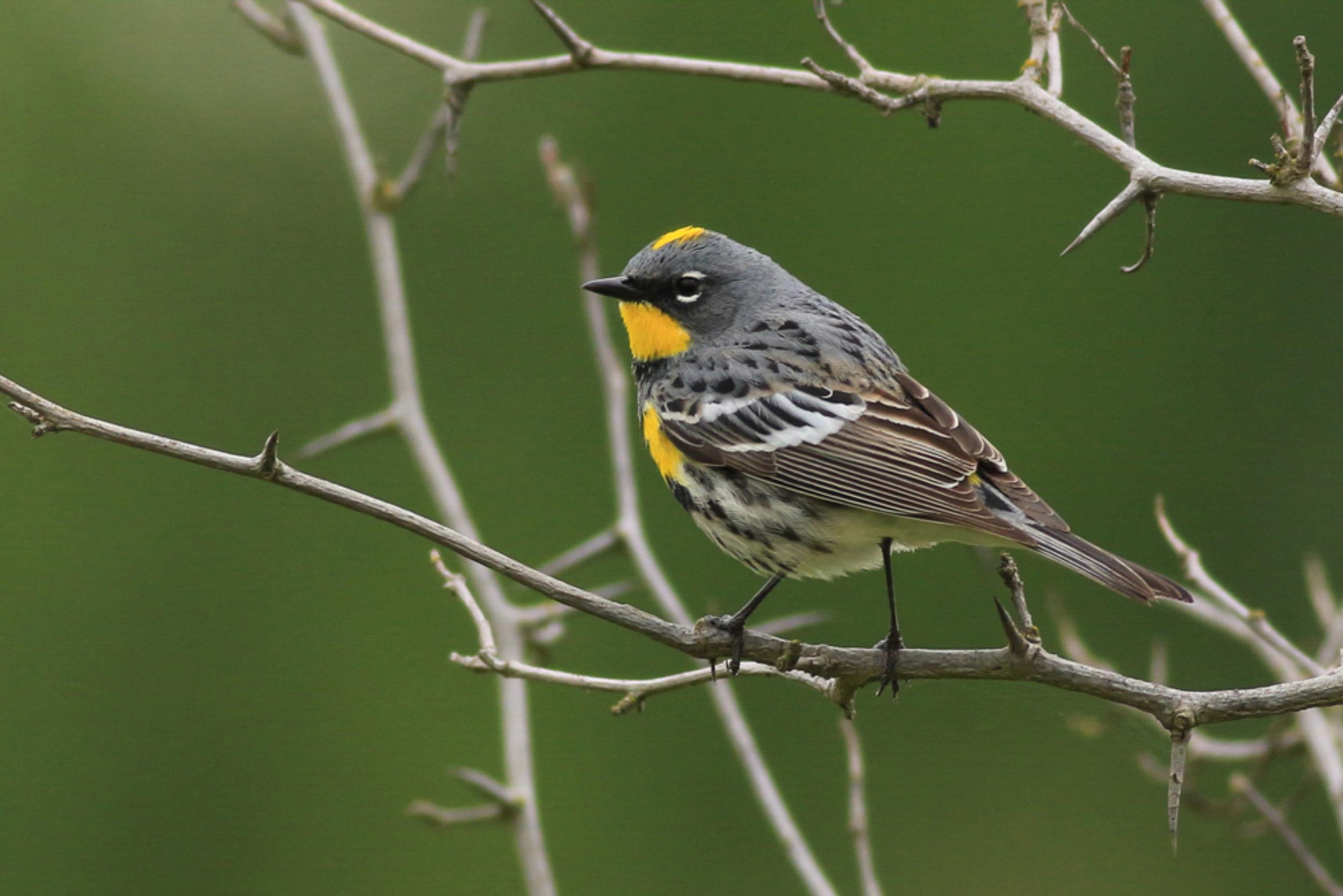 Jeff Wind/Audubon Photography Awards