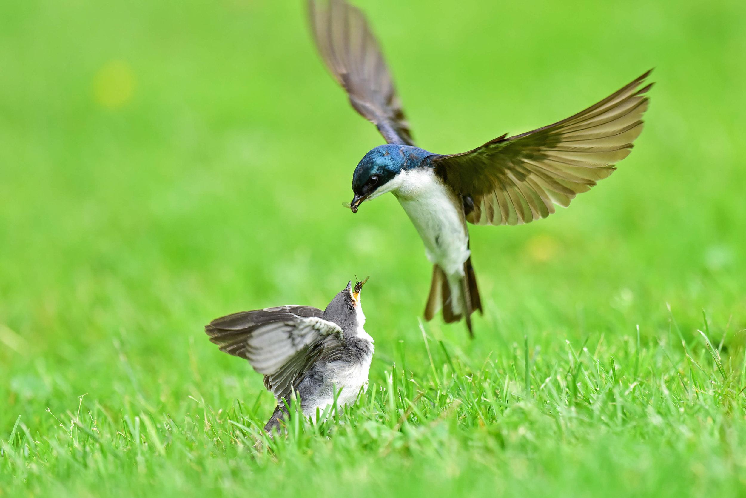 Lynn Cleveland/Audubon Photography Awards