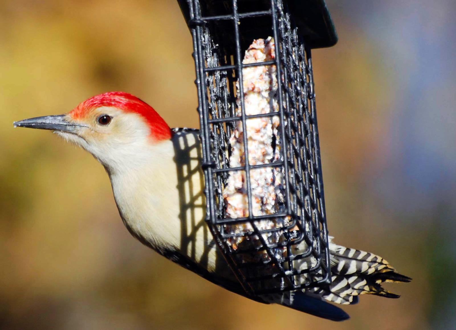 Jerilyn Duefrene / Audubon Photography Awards