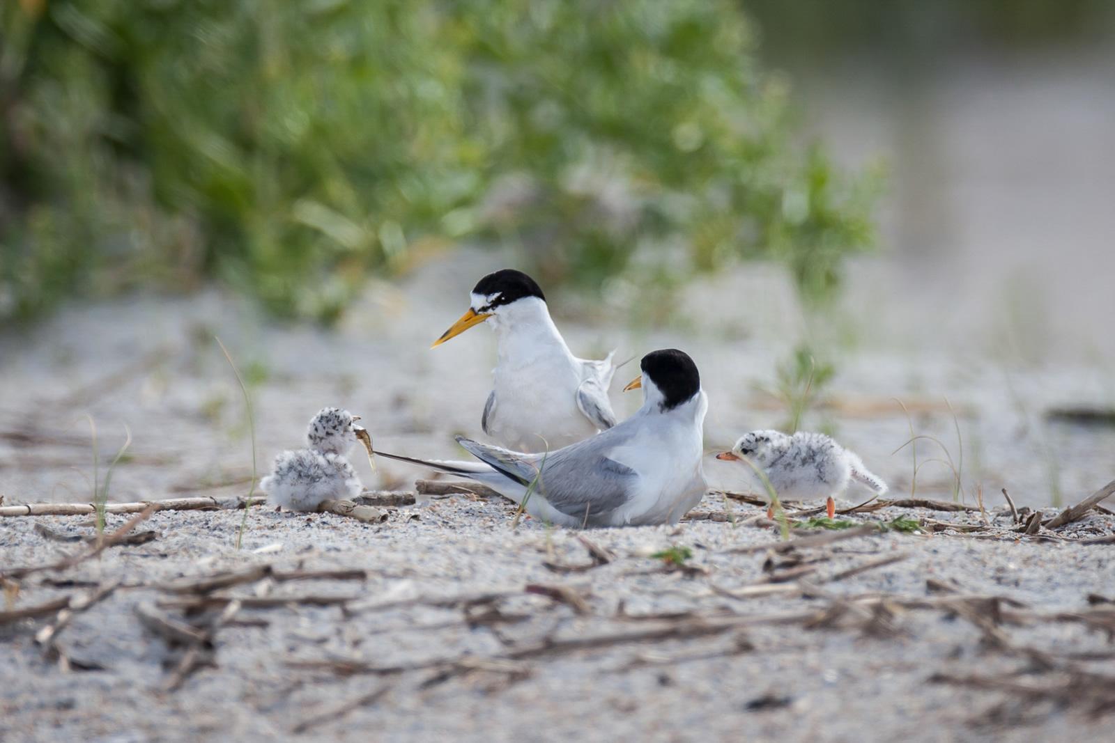 Ethan Slattery/Audubon Photography Awards