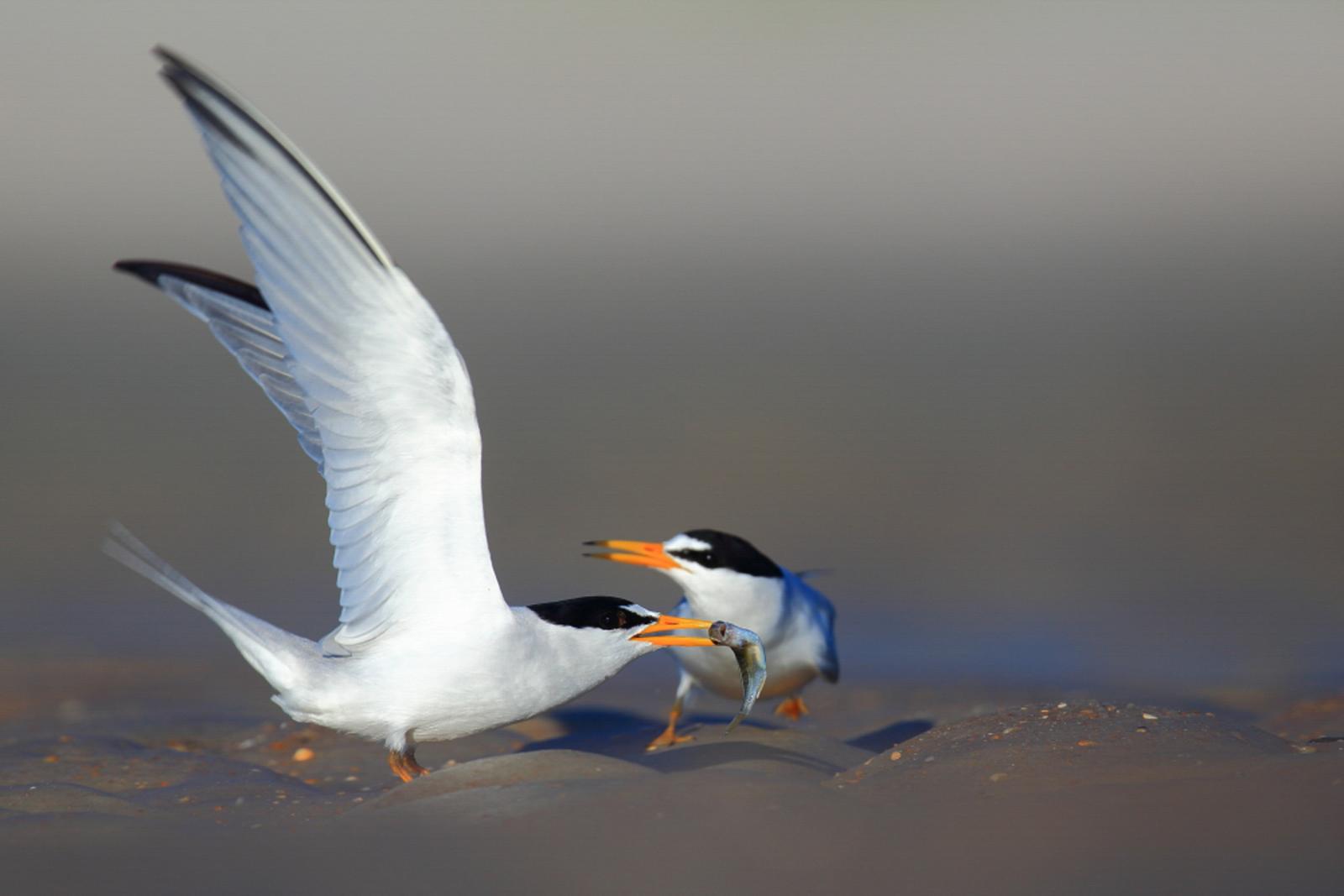 Steve Dimock/Audubon Photography Awards