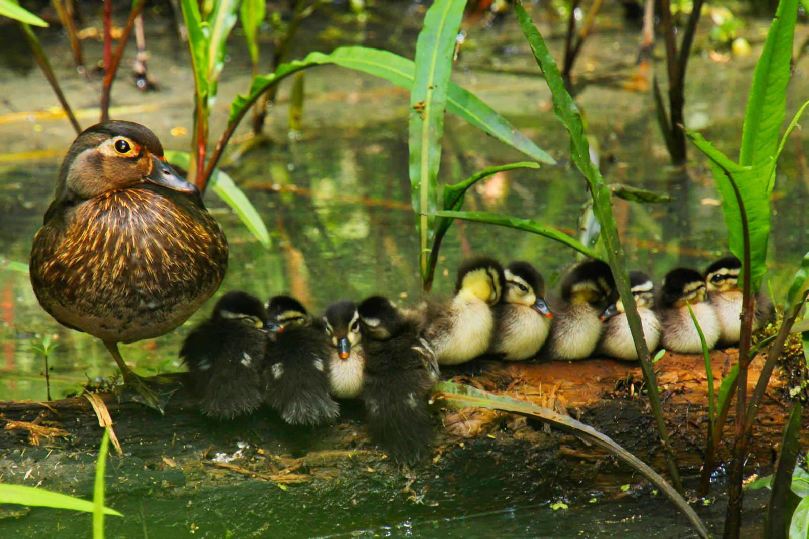 Rob Hawker/Audubon Photography Awards