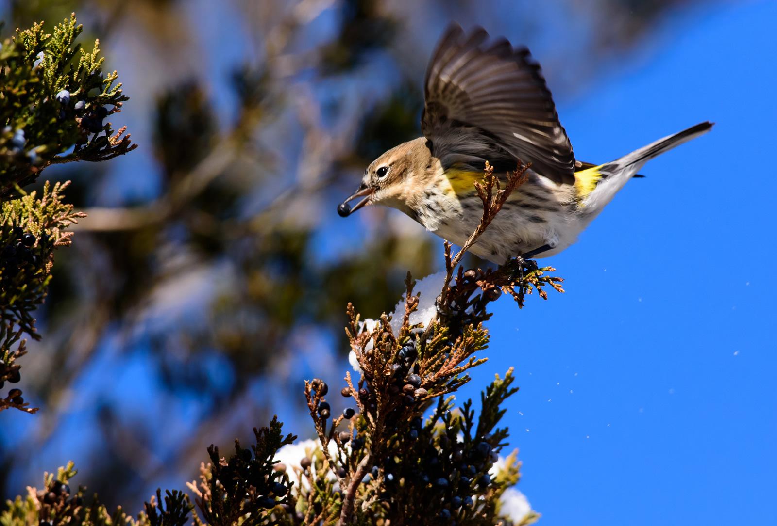 Robert Cook/Audubon Photography Awards