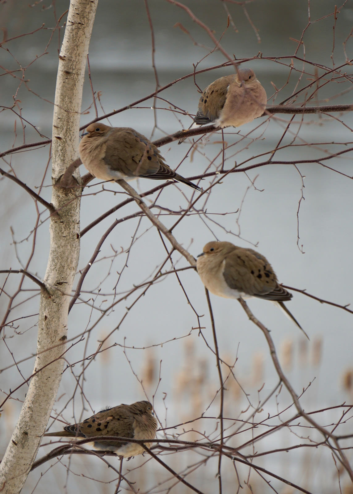 Susan P. Smith_/Great Backyard Bird Count