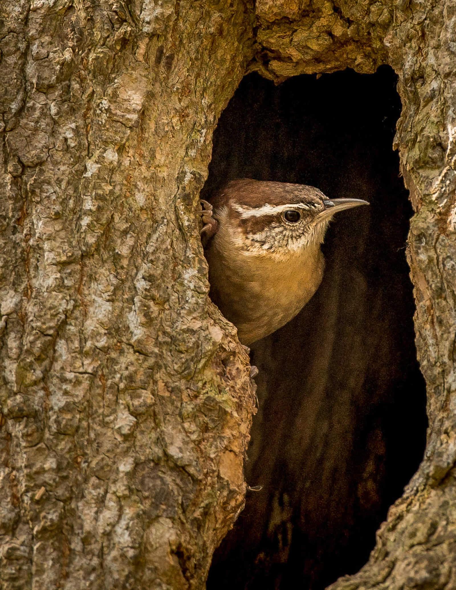 Michael Schmitt / Audubon Photography Awards