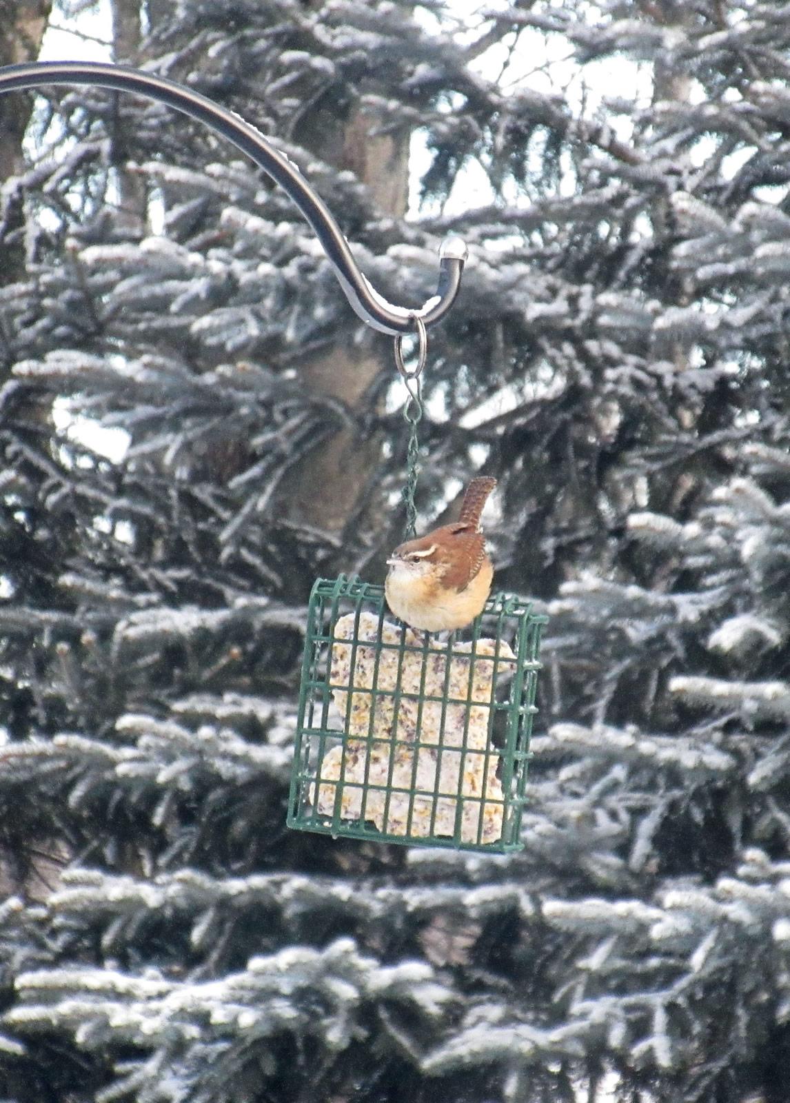 Jenifer Rice/Great Backyard Bird Count