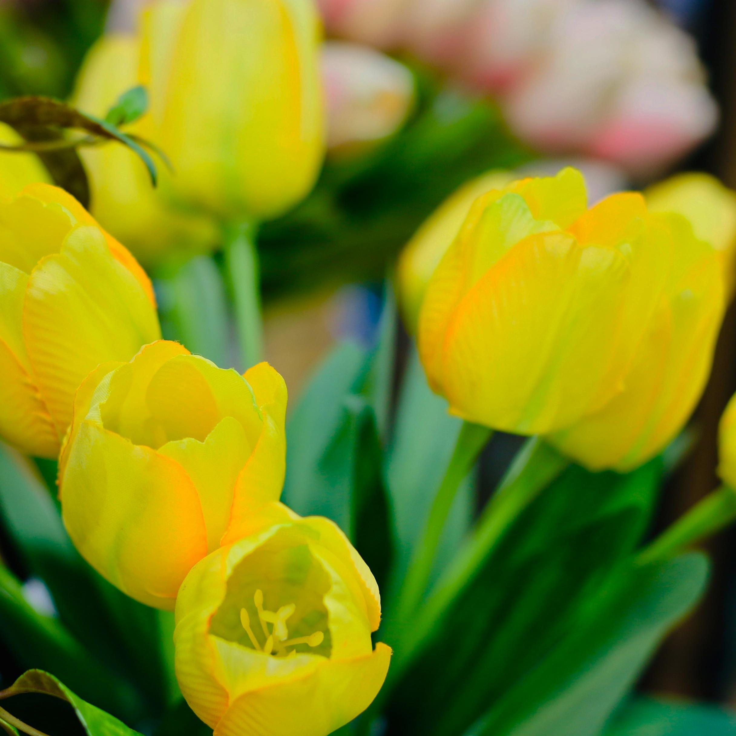 Floral Shop -